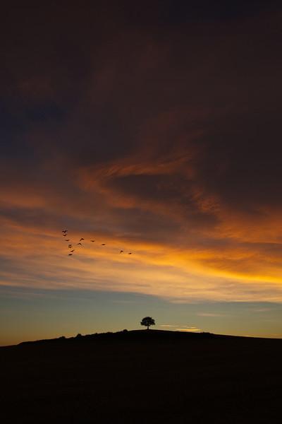 geese at dawn 2013-09-02 at 05-07-04