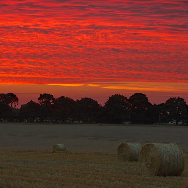 barley field, roughly  2013-08-20 at 04-45-15
