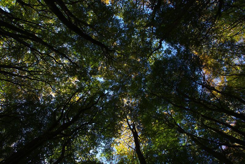 new park woods