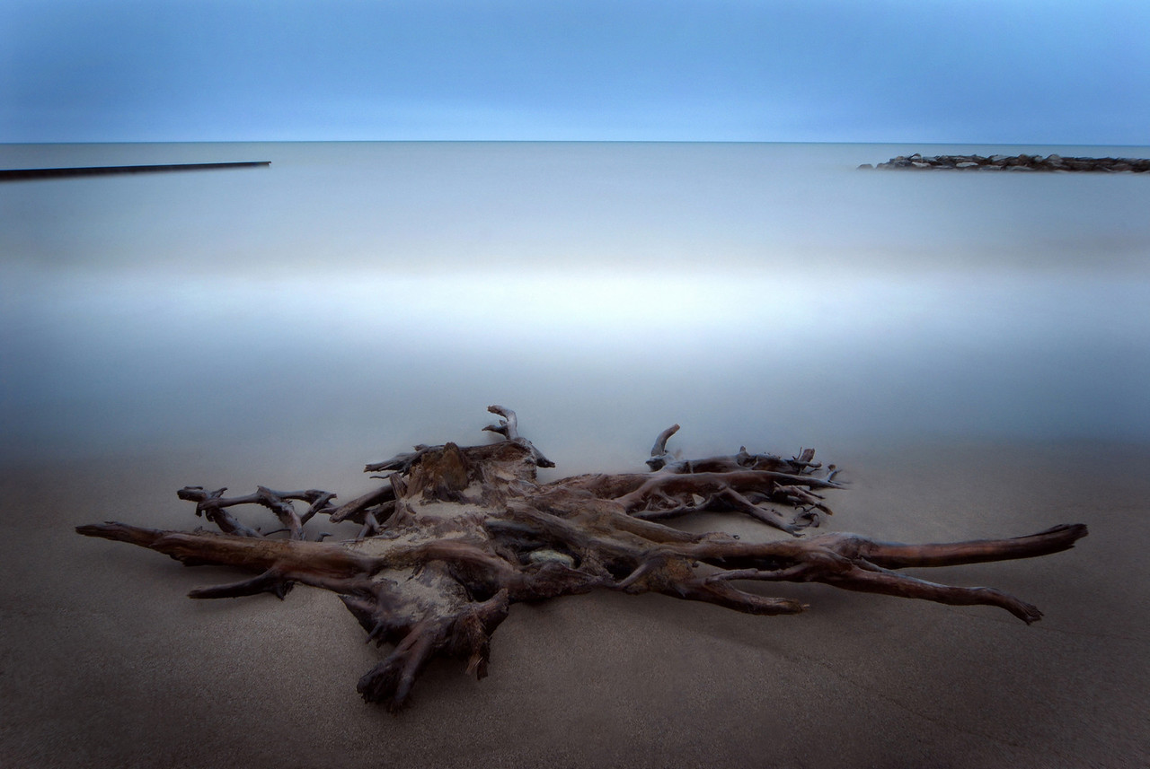 "Driftwood ,  ""The Beach"", Toronto"