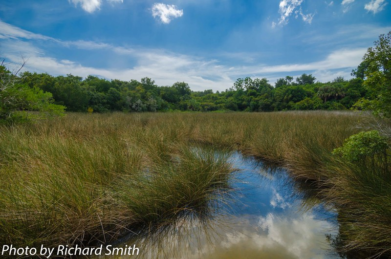 Reflections on the Marsh