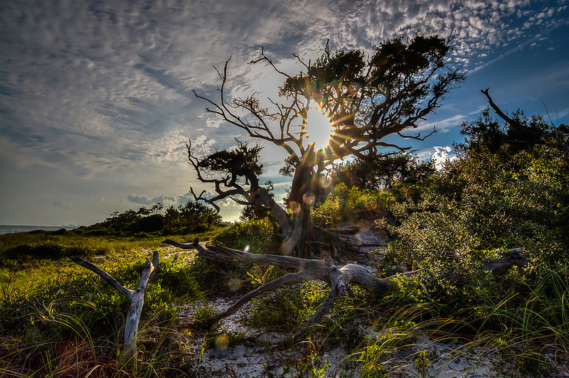Starbursting Sun  Through Trees
