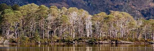 Loch Maree Islands