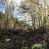 Lockdown II Low Barns wetlands