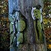 Lockdown II Thornley Woods