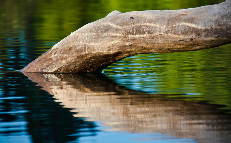 Kayaking this morning. Nice reflected colors around a battle-scarred submerged tree.