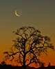 sliver moon 2-24-17
