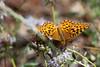 Butterfly5075
