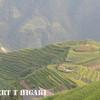 longsheng-3