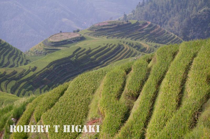 longsheng-12