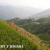 longsheng