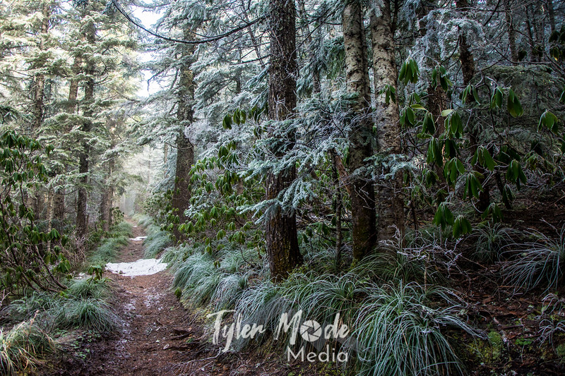 41  G Rime Forest Trail Sharp