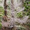 71  G Rime Tree