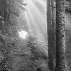 88  G Forest Rays Trail Soft BW V