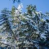 249  G Rime Trees