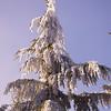 281  G Rime on Tree V
