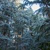 53  G Rime Forest V