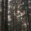 18  G Rime Trees V