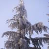 366  G Rime on Tree V