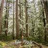 7  G Rime Forest