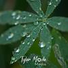 21  G Water Drops