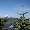 40  G Mt  Adams Through Trees