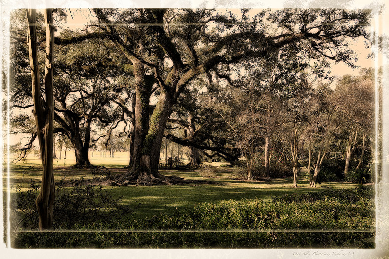 On the grounds near the Oak Alley Plantation in Vacherie, LA