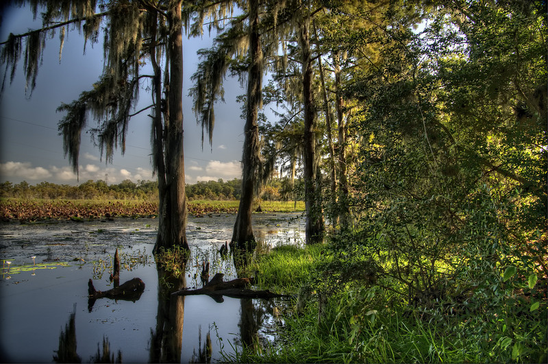 On the Bayou in south west Louisiana near the town of Toomey.