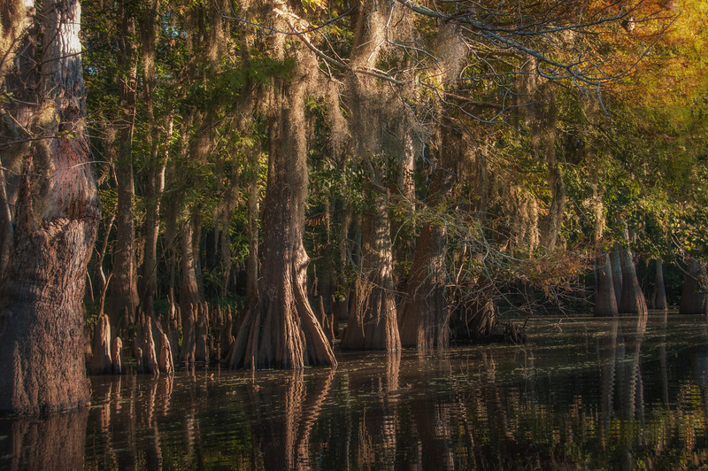 Lacassine Bayou, Louisiana, taken from my kayak.
