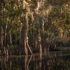 Lacassine Bayou, Louisiana, taken from my kayak.