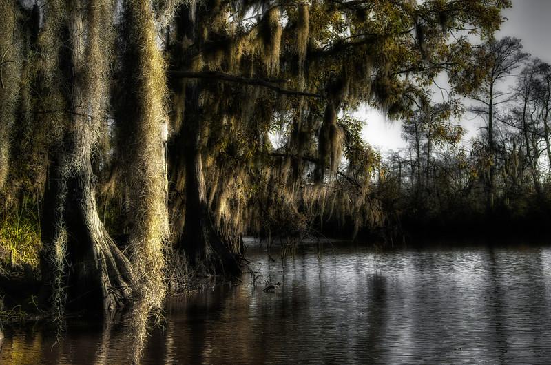 Cypress trees on the Sabine River near Carlyss, Louisiana.