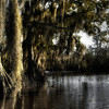 Cypress trees on the Sabine River near Carlyss, Louisiana.