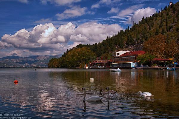 Kastoria Lake (Macedonia) - Swans feeding<br />  Λίμνη Καστοριάς - Κύκνοι σε αναζήτηση τροφής