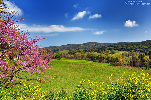 Argalasti (Thessaly, near Volos) - Spring camp full of flowers<br />  Αργαλαστή (Πήλιο) - Ανοιξιάτικο ανθισμένο λιβάδι