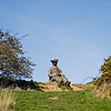 Low Burnham Woods, Durham