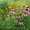 JFNew-rain-garden-Indiana-Pennell