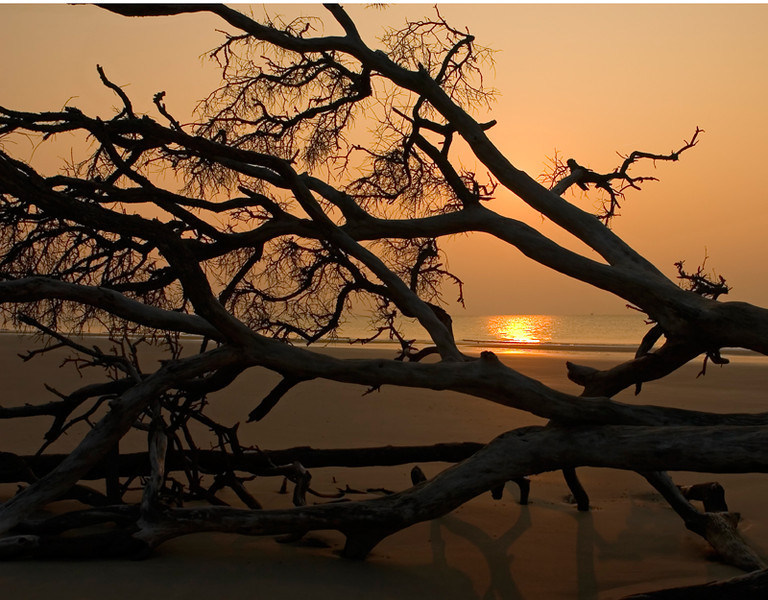 """Brand New Day""<br /> Hunting Island State Park, SC"