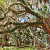"""Resurrection Fern""<br /> Campground<br /> Ossabaw Island, GA"