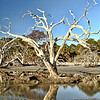 """Boneyard Beauty""<br /> South Beach<br /> Ossabaw Island, GA"
