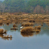 """Foggy Reverie""<br /> Bear Island Wildlife Management Area<br /> Green Pond, SC"