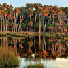 """Palmetto Reflections""<br /> Willow Pond<br /> Ossabaw Island, GA"