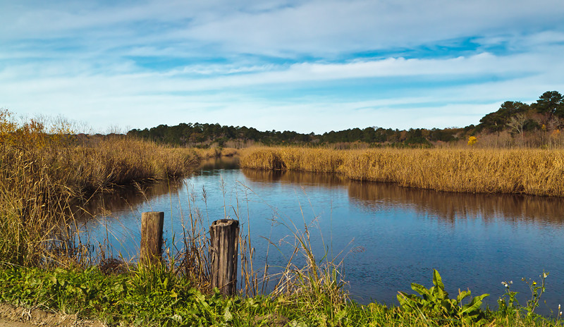 Donnelley Wildlife Management Area<br /> Green Pond, SC