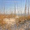 """Dune View""<br /> Hunting Island State Park, SC"