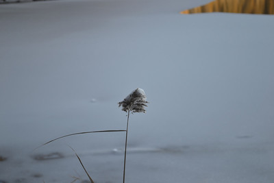 Lowville & Crawford Lake Dec 27 2012