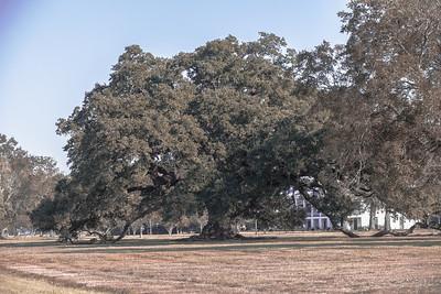 Louisiana -24