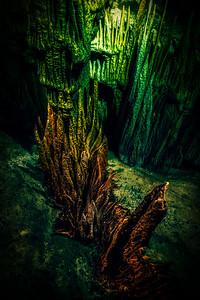 BONUS SHOT: Under The Sea