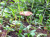 mushroom middle way