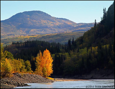 """STANDING OUT"",Stikine river,B.C.,Canada."