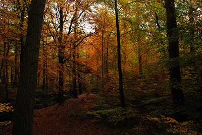 Late Oct colour in Mabie Forest.