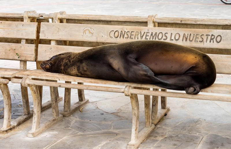 Sea lion, San Cristobal, Galapagos